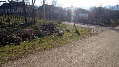 Гуси в селе Передовое