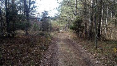 Лесная дорога в Передовое
