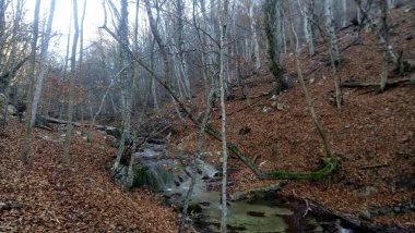 Осеннее русло реки
